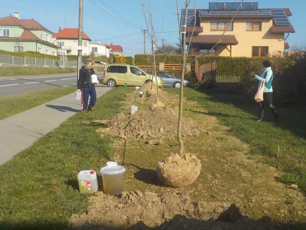 Sázení stromů u Jednoty 2