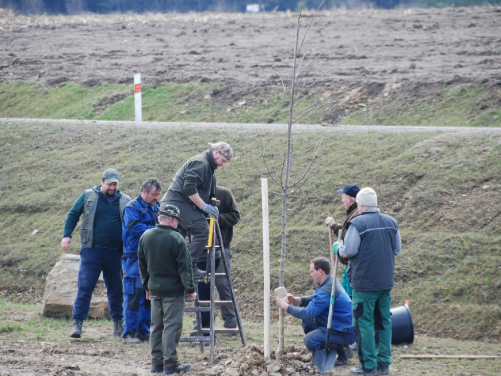 Výsadba stromů u kruhového objezdu 2