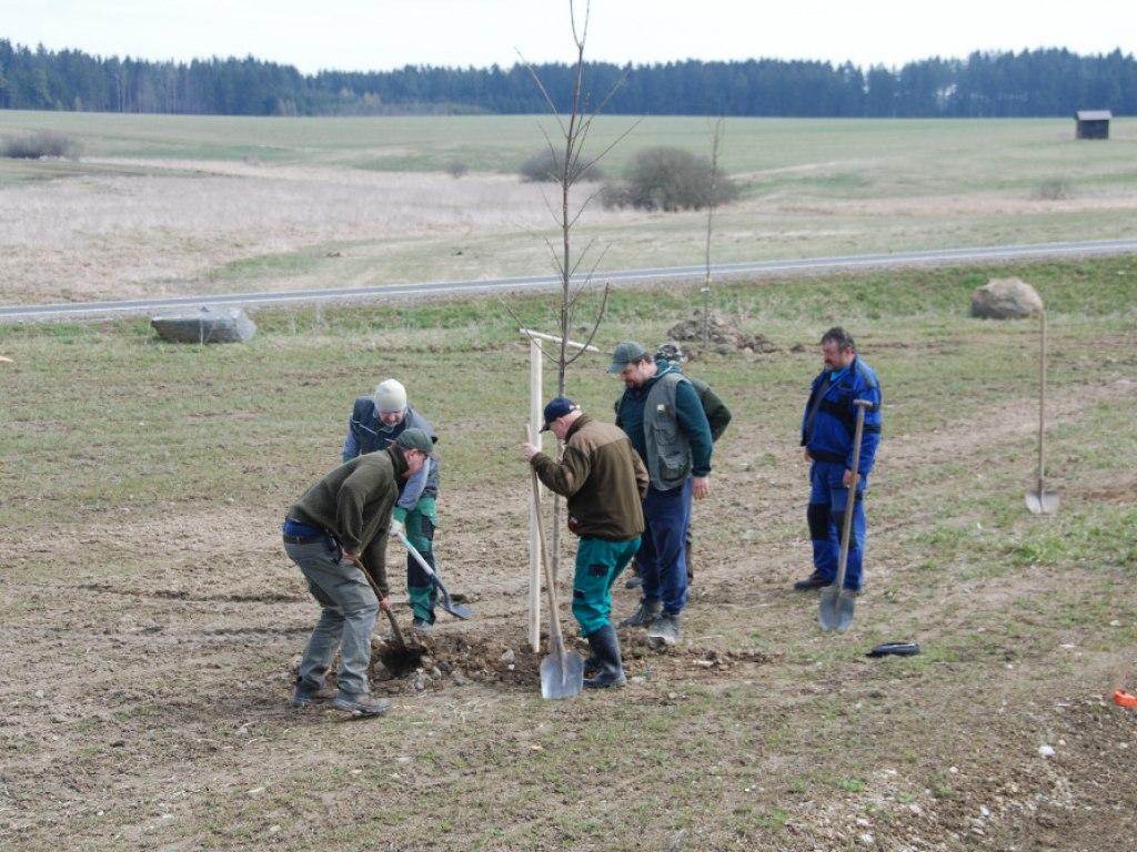 Výsadba stromů u kruhového objezdu 3