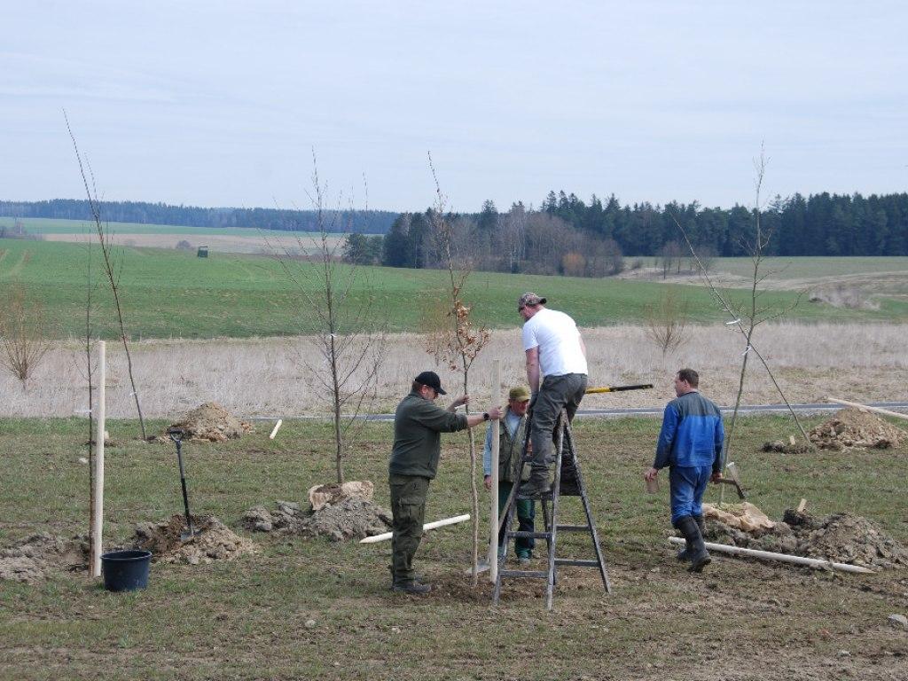 Výsadba stromů u kruhového objezdu 4
