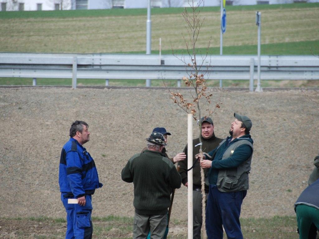 Výsadba stromů u kruhového objezdu 5