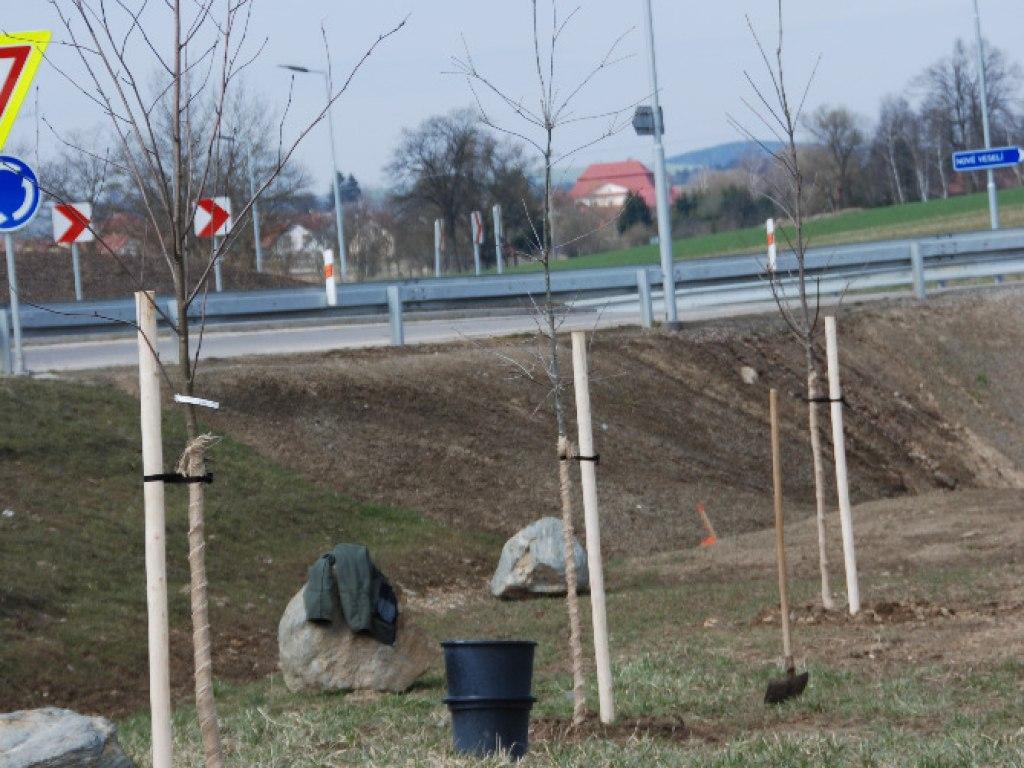 Výsadba stromů u kruhového objezdu 8