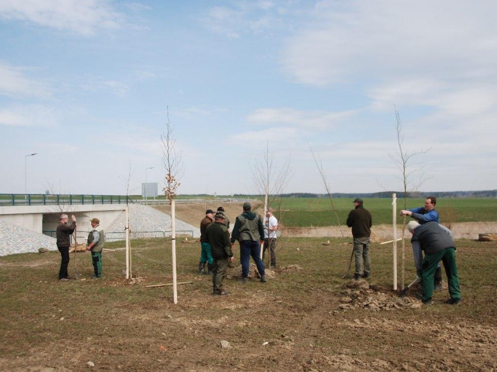 Výsadba stromů u kruhového objezdu 10