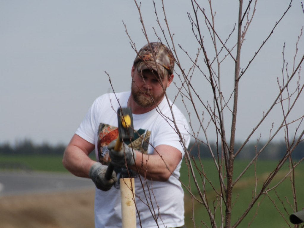 Výsadba stromů u kruhového objezdu 13