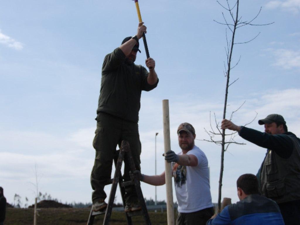 Výsadba stromů u kruhového objezdu 15