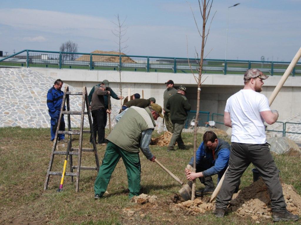 Výsadba stromů u kruhového objezdu 17