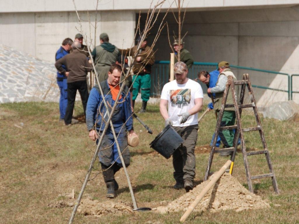 Výsadba stromů u kruhového objezdu 21