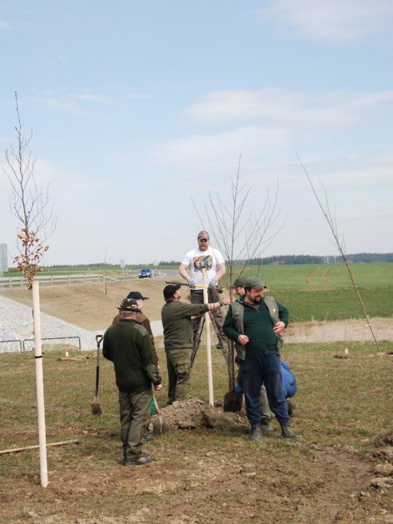 Výsadba stromů u kruhového objezdu 12